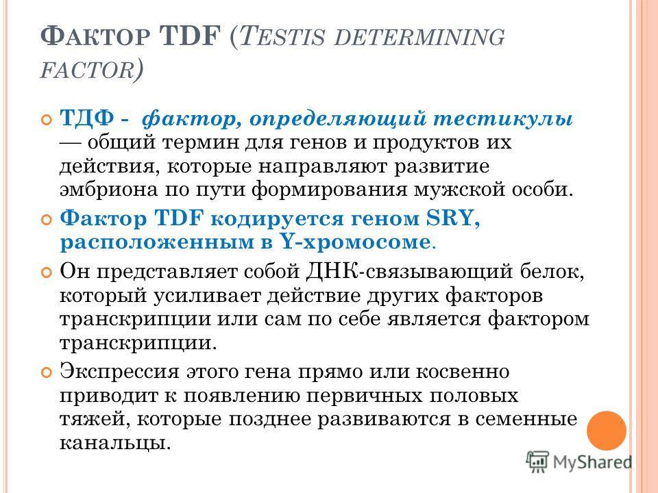 Ф АКТОР TDF ( T ESTIS DETERMINING FACTOR ) ТДФ - фактор, определяющий тестикулы общий термин для генов и продуктов их действия, которые направляют развитие эмбриона по пути формирования мужской особи. Фактор TDF кодируется геном SRY, расположенным в