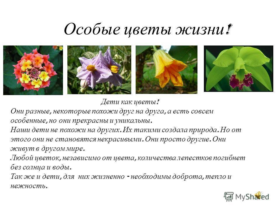 Особые цветы жизни ! Дети как цветы ! Они разные, некоторые похожи друг на друга, а есть совсем особенные, но они прекрасны и уникальны. Наши дети не похожи на других. Их такими создала природа. Но от этого они не становятся некрасивыми. Они просто д