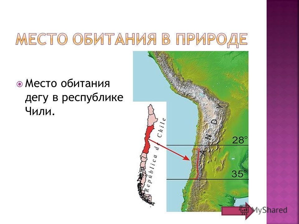 Место обитания дегу в республике Чили.