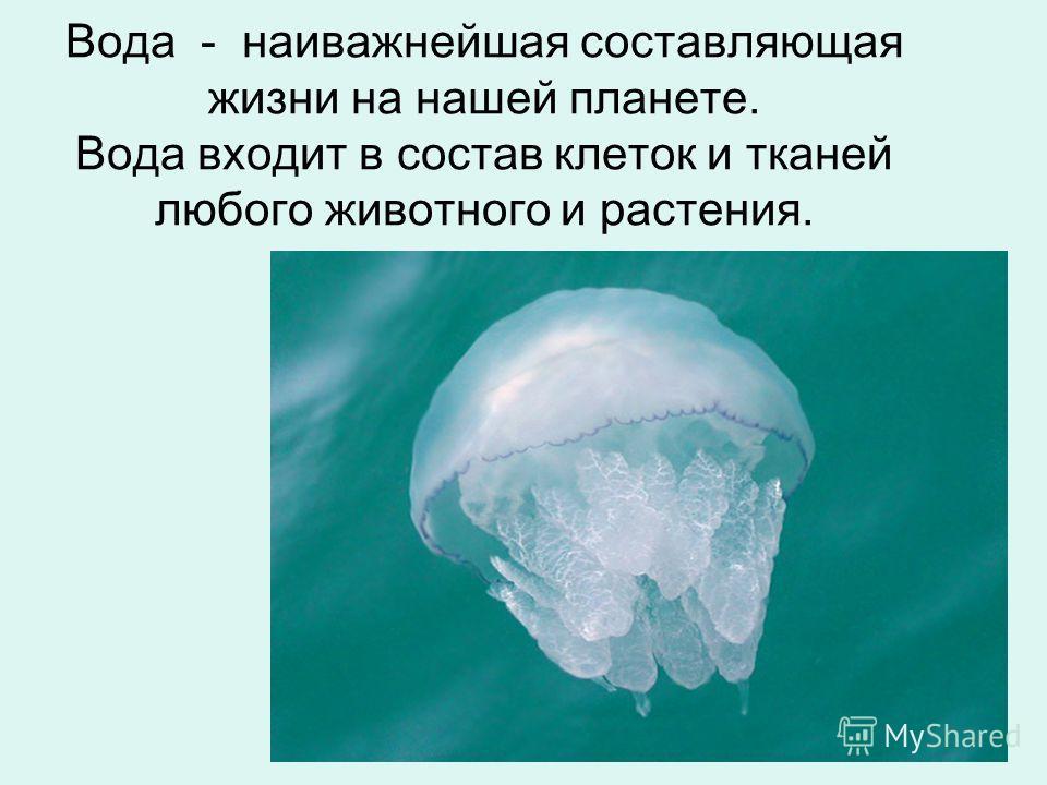 Вода - наиважнейшая составляющая жизни на нашей планете. Вода входит в состав клеток и тканей любого животного и растения.