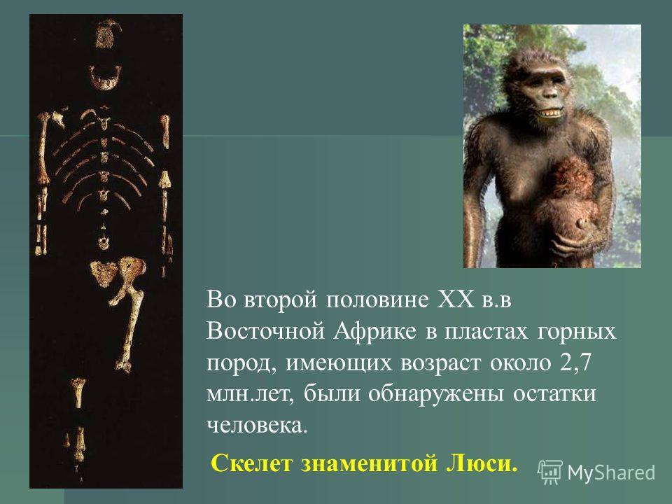 Во второй половине ХХ в.в Восточной Африке в пластах горных пород, имеющих возраст около 2,7 млн.лет, были обнаружены остатки человека. Скелет знаменитой Люси.