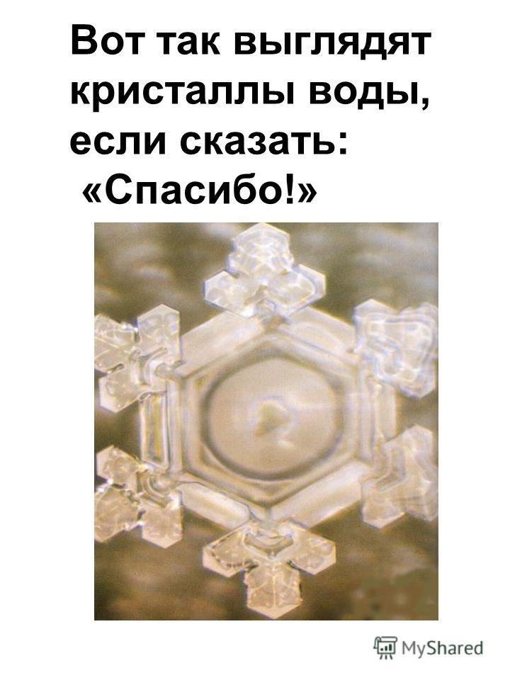 Вот так выглядят кристаллы воды, если сказать: «Спасибо!»