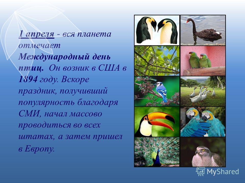 1 апреля - вся планета отмечает Международный день птиц. Он возник в США в 1894 году. Вскоре праздник, получивший популярность благодаря СМИ, начал массово проводиться во всех штатах, а затем пришел в Европу.
