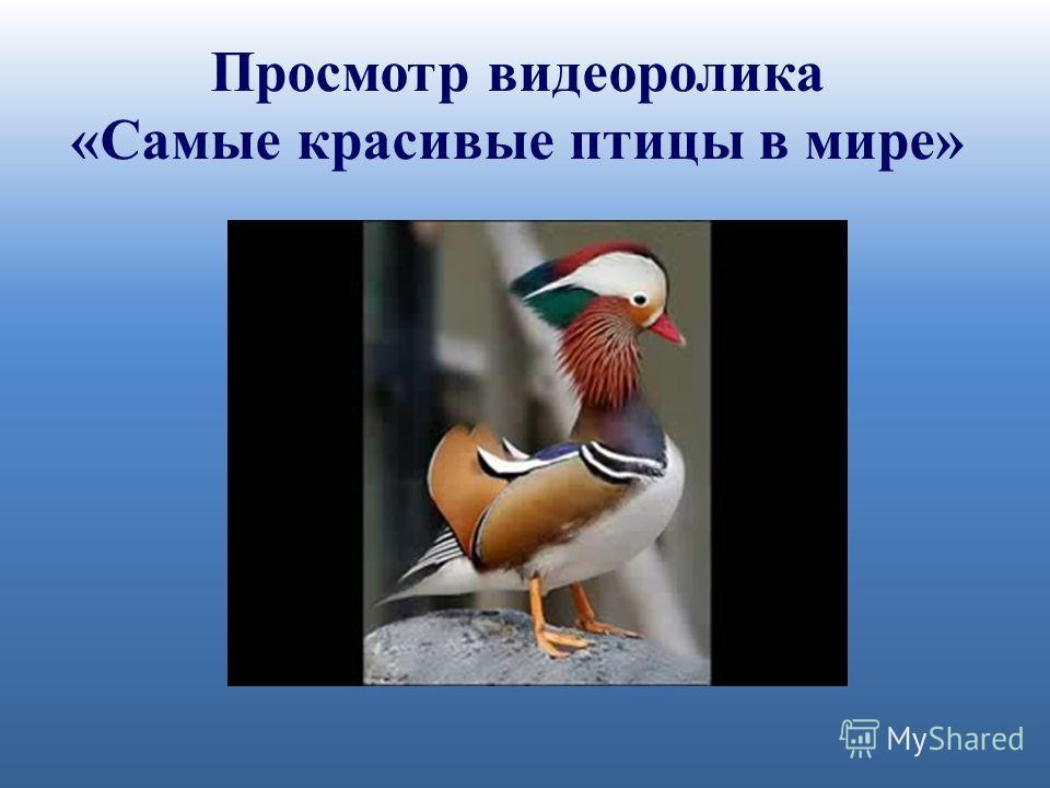 Просмотр видеоролика «Самые красивые птицы в мире»
