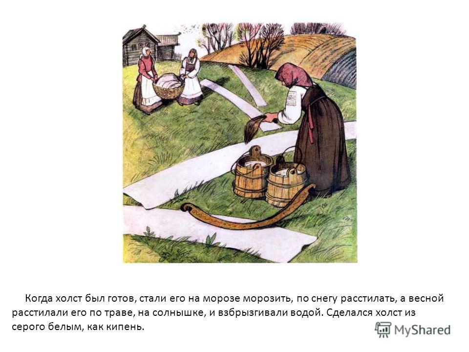 Когда холст был готов, стали его на морозе морозить, по снегу расстилать, а весной расстилали его по траве, на солнышке, и взбрызгивали водой. Сделался холст из серого белым, как кипень.