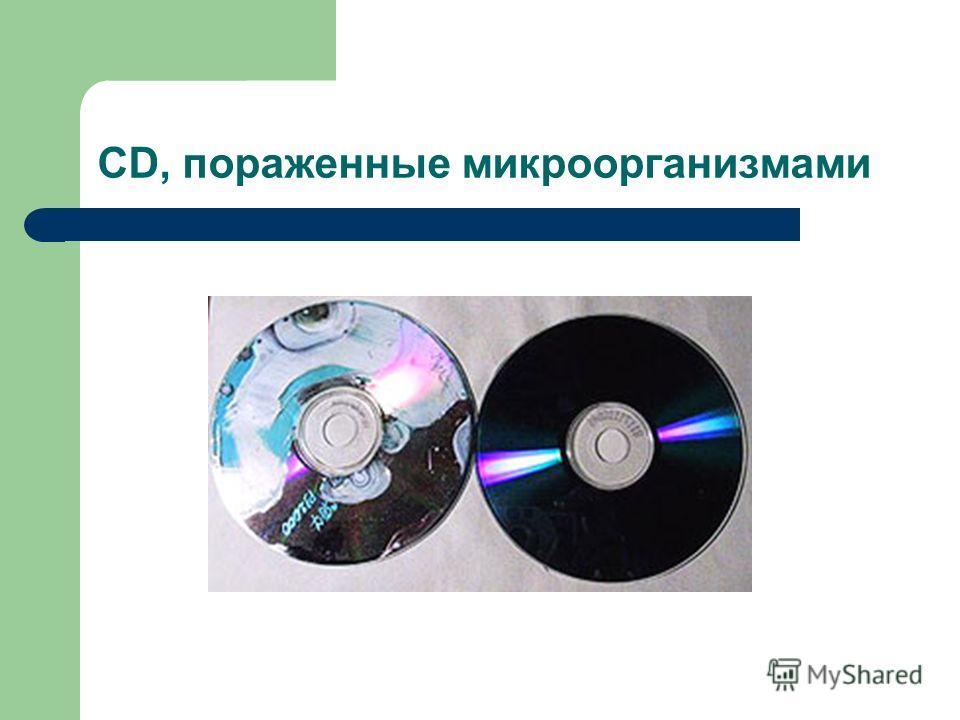 CD, пораженные микроорганизмами