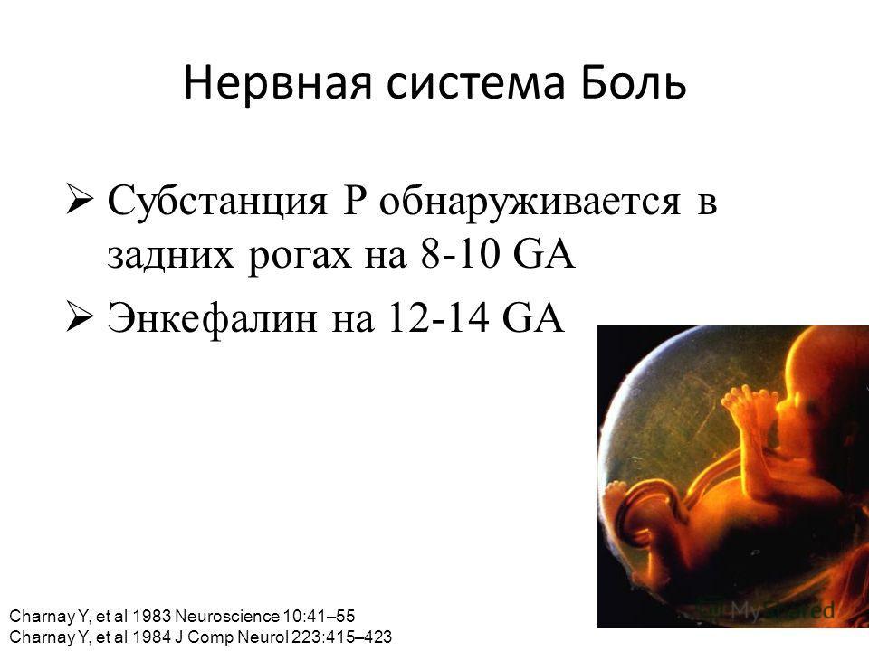 Нервная система Боль Субстанция Р обнаруживается в задних рогах на 8-10 GA Энкефалин на 12-14 GA Charnay Y, et al 1983 Neuroscience 10:41–55 Charnay Y, et al 1984 J Comp Neurol 223:415–423