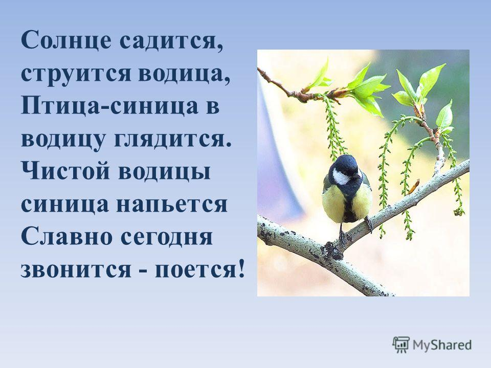 Солнце садится, струится водица, Птица-синица в водицу глядится. Чистой водицы синица напьется Славно сегодня звонится - поется!