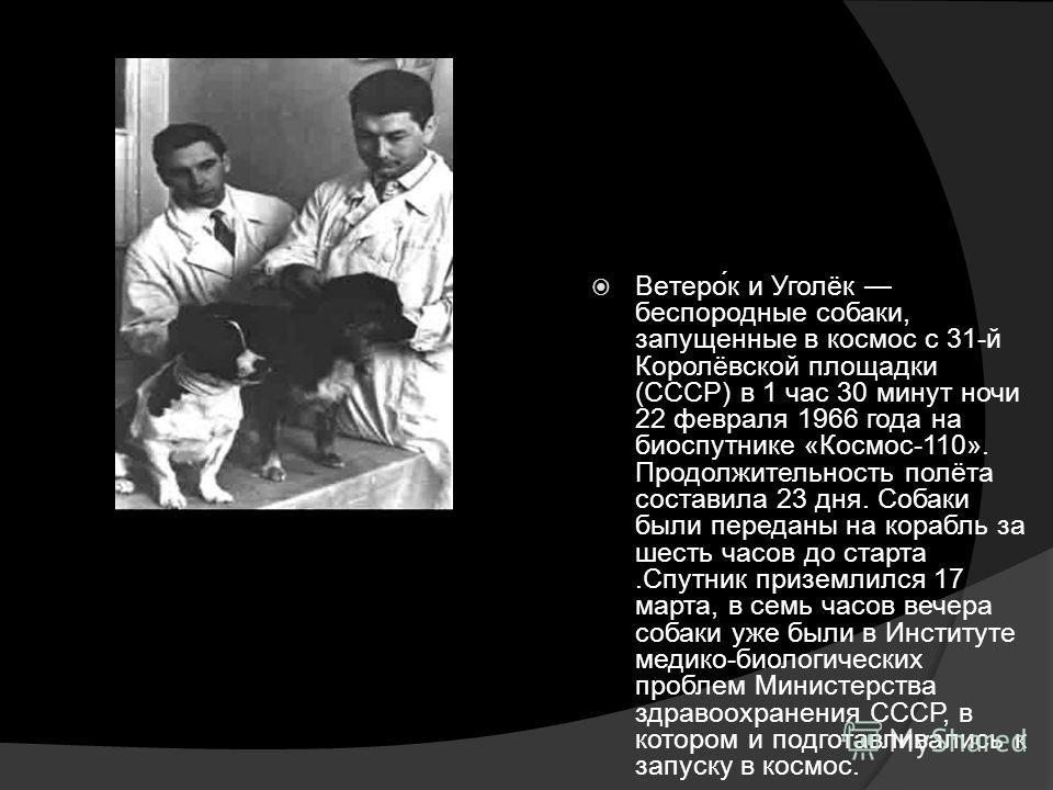 Ветерок и Уголёк беспородные собаки, запущенные в космос с 31-й Королёвской площадки (СССР) в 1 час 30 минут ночи 22 февраля 1966 года на биоспутнике «Космос-110». Продолжительность полёта составила 23 дня. Собаки были переданы на корабль за шесть ча