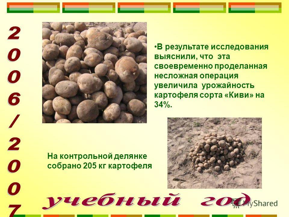 В результате исследования выяснили, что эта своевременно проделанная несложная операция увеличила урожайность картофеля сорта «Киви» на 34%. На контрольной делянке собрано 205 кг картофеля