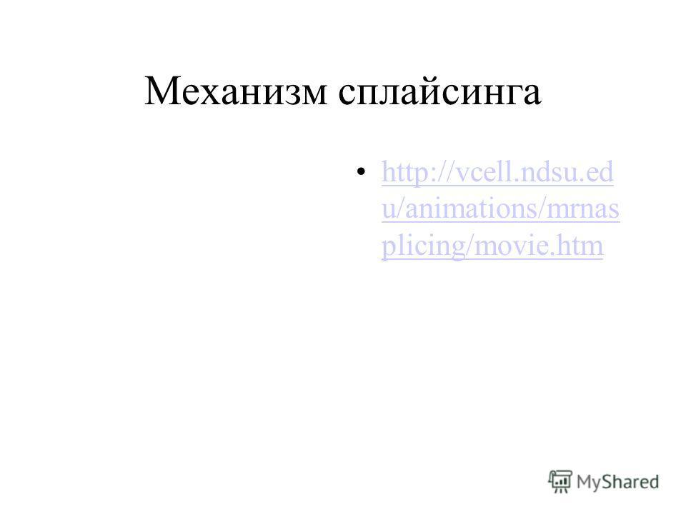 Механизм сплайсинга http://vcell.ndsu.ed u/animations/mrnas plicing/movie.htmhttp://vcell.ndsu.ed u/animations/mrnas plicing/movie.htm