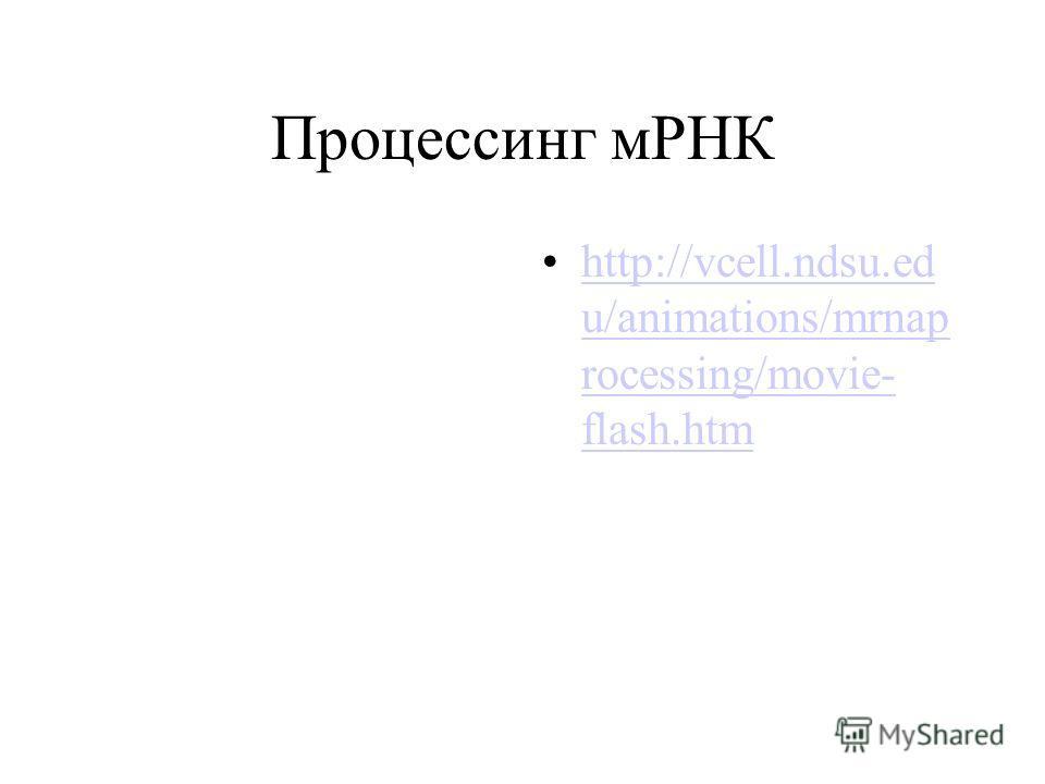 Процессинг мРНК http://vcell.ndsu.ed u/animations/mrnap rocessing/movie- flash.htmhttp://vcell.ndsu.ed u/animations/mrnap rocessing/movie- flash.htm