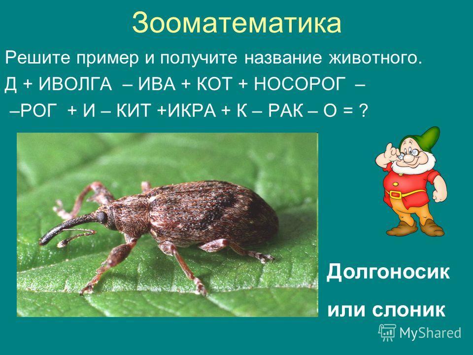 Зооматематика Решите пример и получите название животного. Д + ИВОЛГА – ИВА + КОТ + НОСОРОГ – –РОГ + И – КИТ +ИКРА + К – РАК – О = ? Долгоносик или слоник