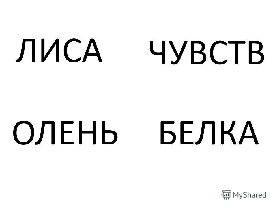 ЛИСА ЧУВСТВ ОЛЕНЬБЕЛКА