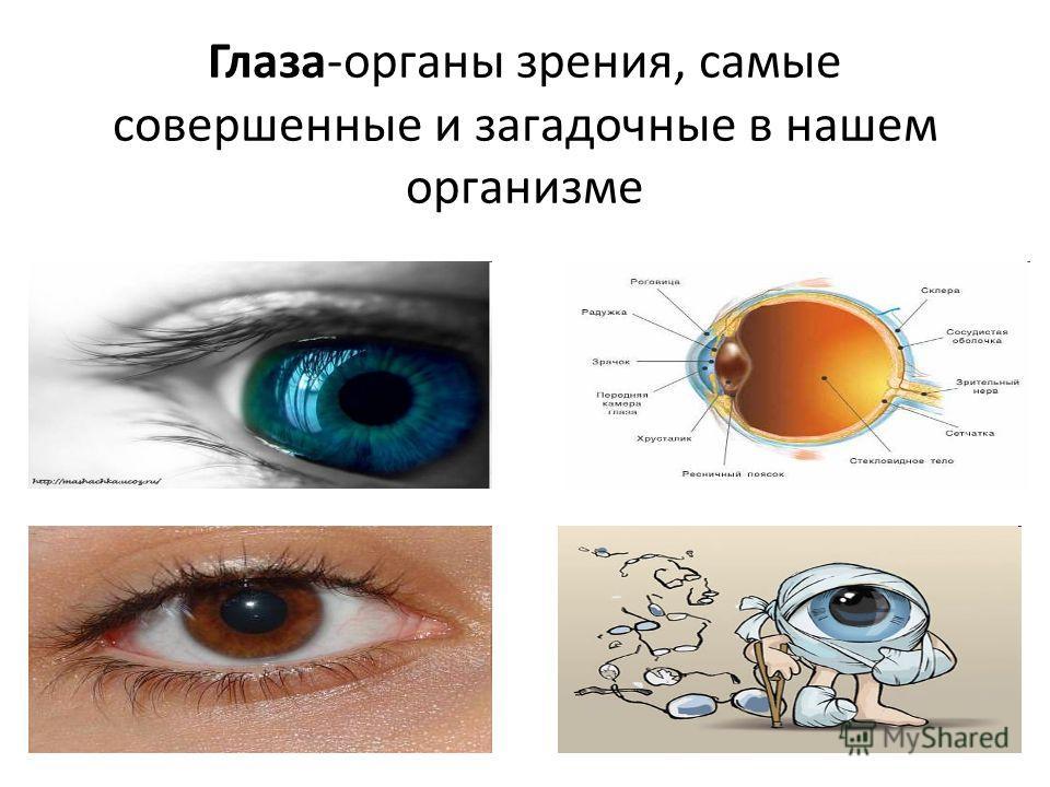 Глаза-органы зрения, самые совершенные и загадочные в нашем организме