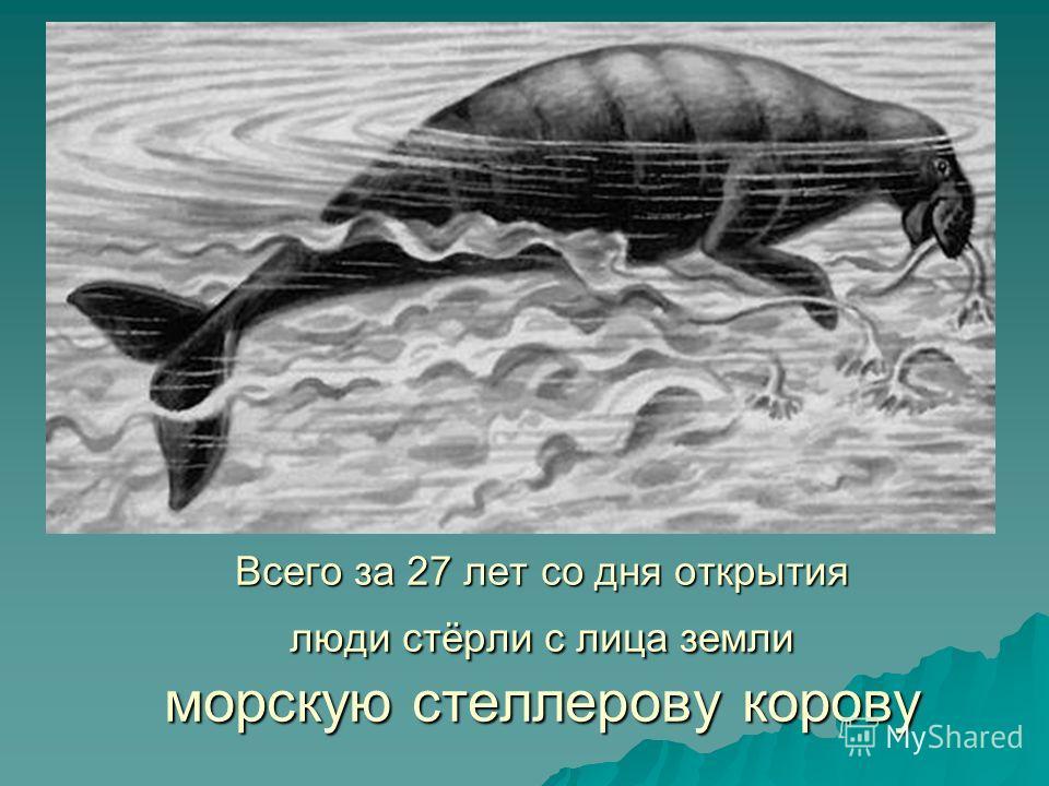 Всего за 27 лет со дня открытия люди стёрли с лица земли морскую стеллерову корову