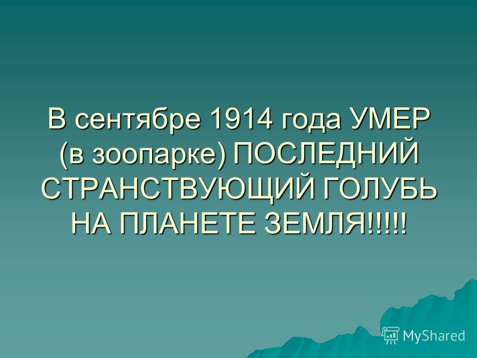 В сентябре 1914 года УМЕР (в зоопарке) ПОСЛЕДНИЙ СТРАНСТВУЮЩИЙ ГОЛУБЬ НА ПЛАНЕТЕ ЗЕМЛЯ!!!!!