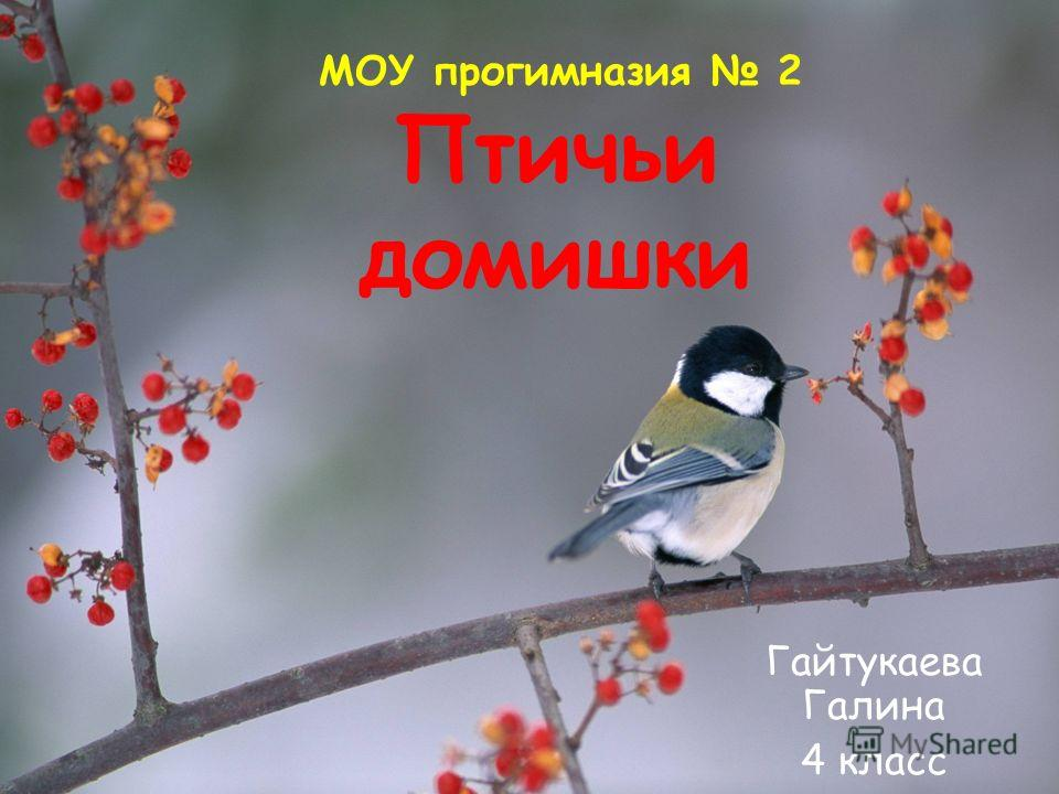 Птичьи домишки Гайтукаева Галина 4 класс МОУ прогимназия 2