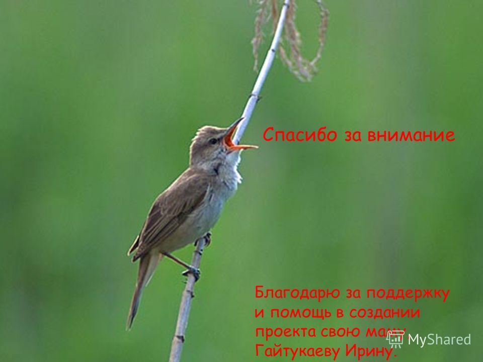 Спасибо за внимание Благодарю за поддержку и помощь в создании проекта свою маму, Гайтукаеву Ирину.