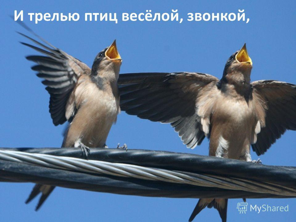 И трелью птиц весёлой, звонкой,