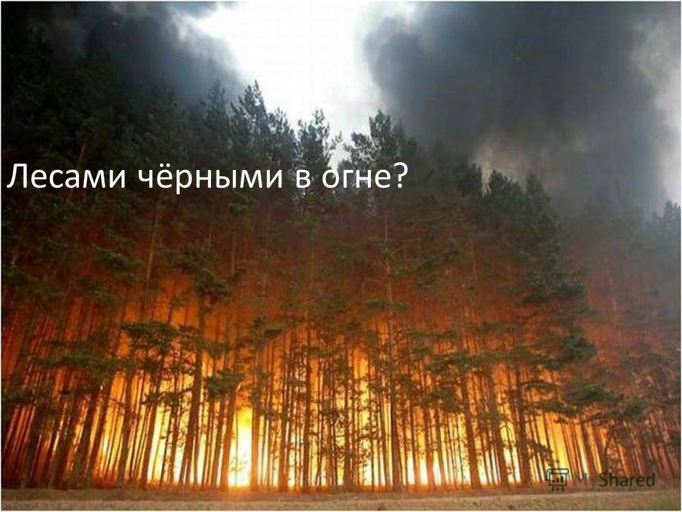 Лесами чёрными в огне?