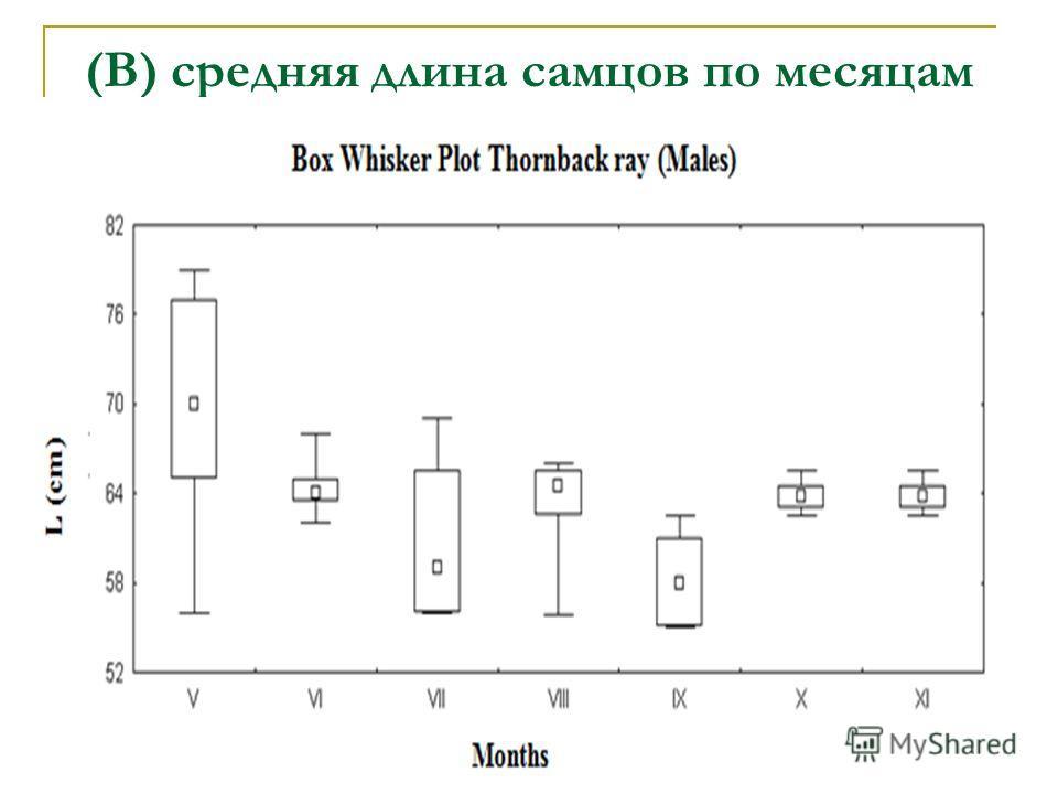 (B) средняя длина самцов по месяцам