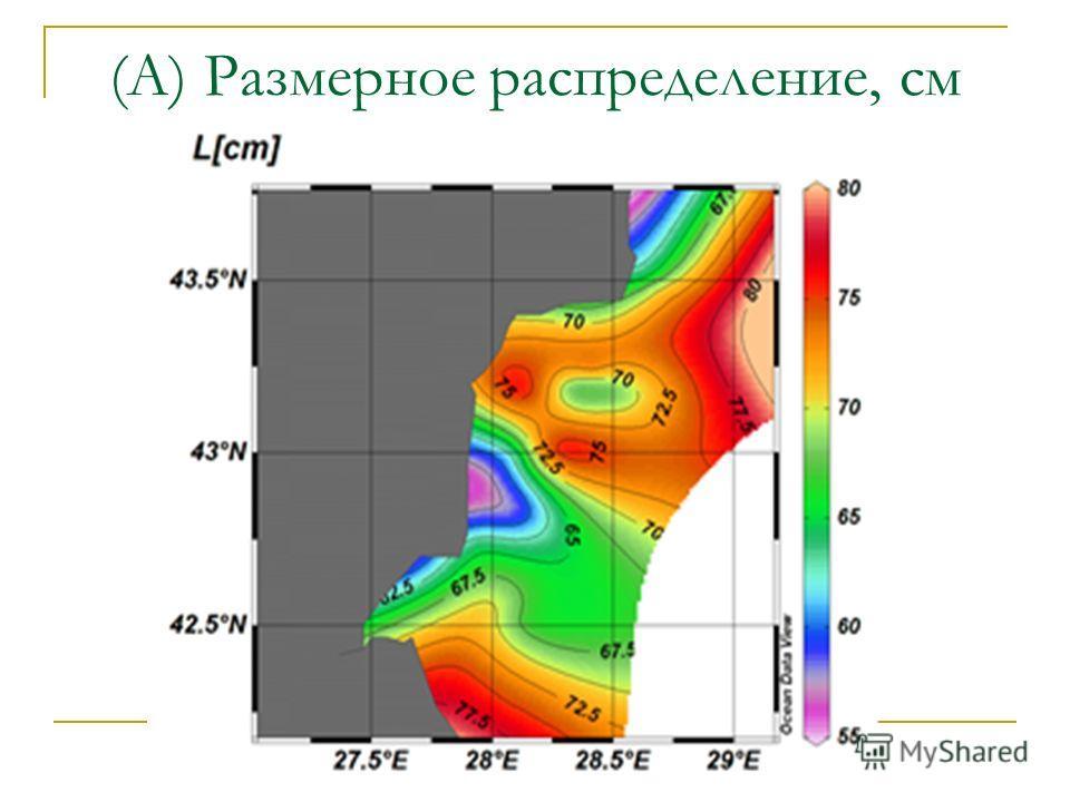 (А) Размерное распределение, см