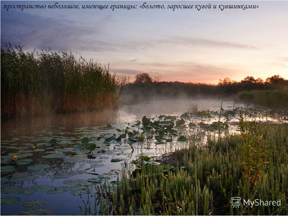 пространство небольшое, имеющее границы: «болото, заросшее кугой и кувшинками»