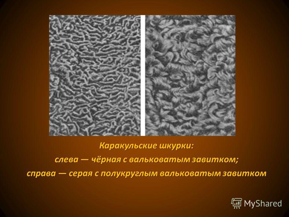 Каракульские шкурки: слева чёрная с вальковатым завитком; справа серая с полукруглым вальковатым завитком
