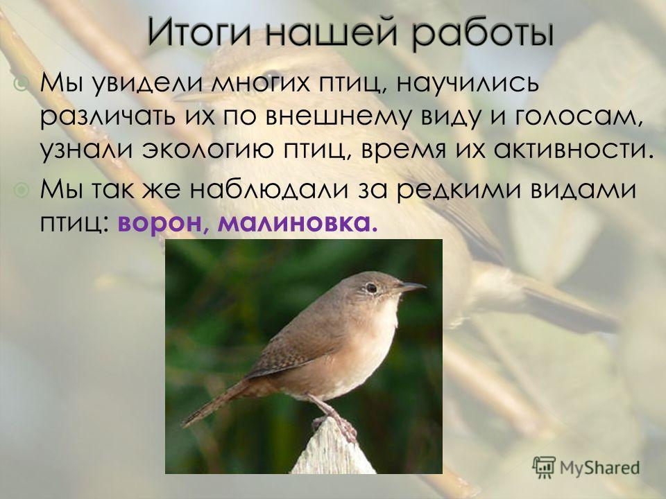 Мы увидели многих птиц, научились различать их по внешнему виду и голосам, узнали экологию птиц, время их активности. Мы так же наблюдали за редкими видами птиц: ворон, малиновка.