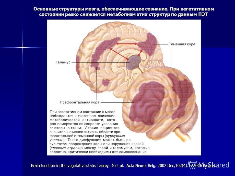 Основные структуры мозга, обеспечивающие сознание. При вегетативном состоянии резко снижается метаболизм этих структур по данным ПЭТ Brain function in the vegetative state. Laureys S et al. Acta Neurol Belg. 2002 Dec;102(4):177-85. Review.