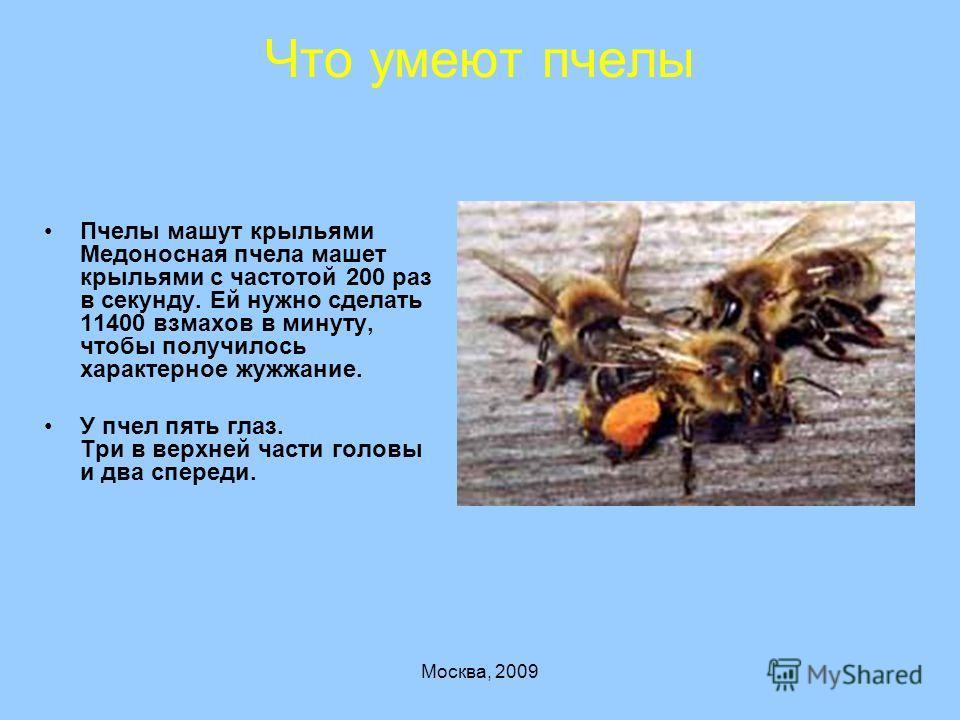 Москва, 2009 Что умеют пчелы Пчелы машут крыльями Медоносная пчела машет крыльями с частотой 200 раз в секунду. Ей нужно сделать 11400 взмахов в минуту, чтобы получилось характерное жужжание. У пчел пять глаз. Три в верхней части головы и два спереди