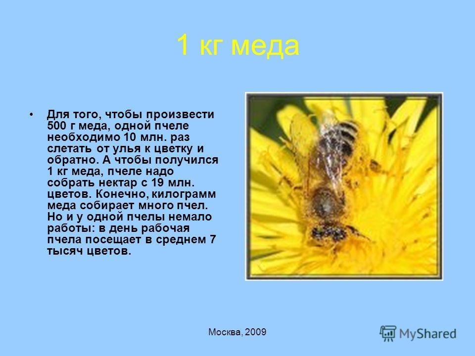 Москва, 2009 1 кг меда Для того, чтобы произвести 500 г меда, одной пчеле необходимо 10 млн. раз слетать от улья к цветку и обратно. А чтобы получился 1 кг меда, пчеле надо собрать нектар с 19 млн. цветов. Конечно, килограмм меда собирает много пчел.