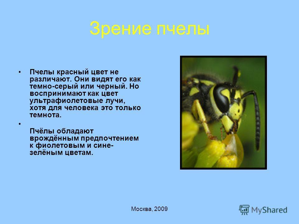 Москва, 2009 Зрение пчелы Пчелы красный цвет не различают. Они видят его как темно-серый или черный. Но воспринимают как цвет ультрафиолетовые лучи, хотя для человека это только темнота. Пчёлы обладают врождённым предпочтением к фиолетовым и сине- зе