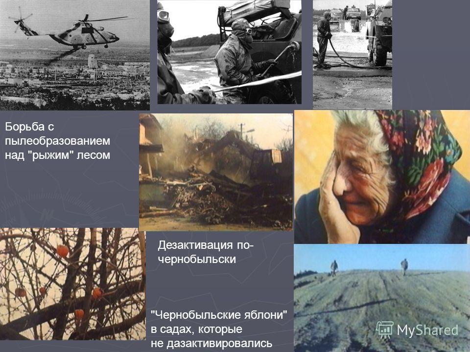 Чернобыльские яблони в садах, которые не дазактивировались Дезактивация по- чернобыльски Борьба с пылеобразованием над рыжим лесом