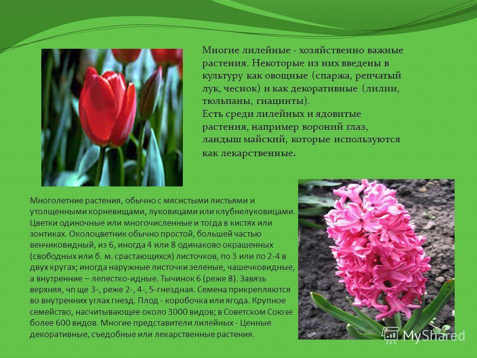 Многолетние растения, обычно с мясистыми листьями и утолщенными корневищами, луковицами или клубнелуковицами. Цветки одиночные или многочисленные и тогда в кистях или зонтиках. Околоцветник обычно простой, большей частью венчиковидный, из 6, иногда 4