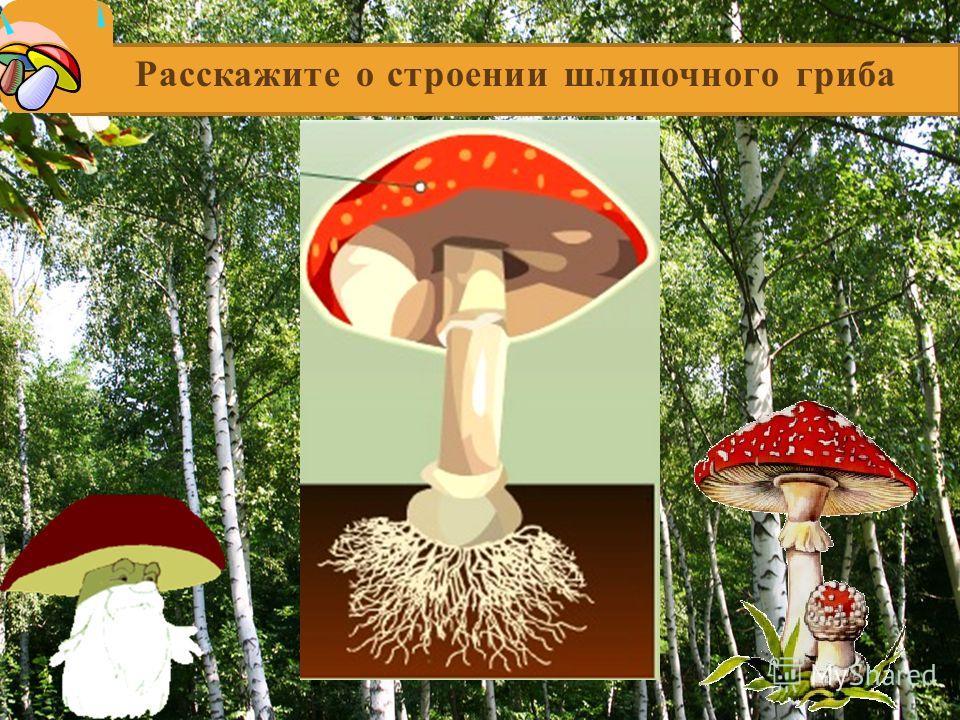 Расскажите о строении шляпочного гриба