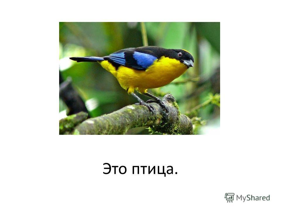 Это птица.