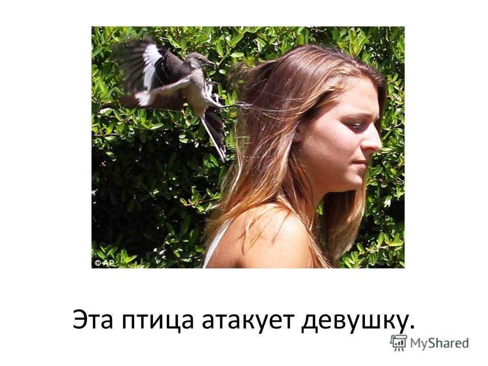 Эта птица атакует девушку.