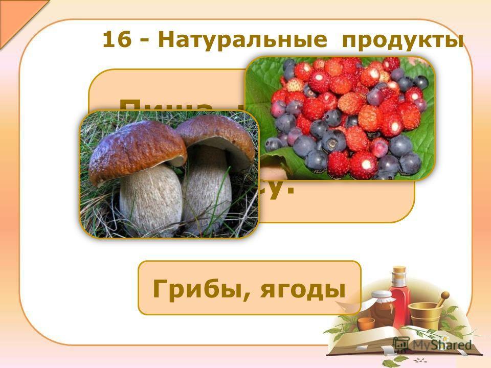 Грибы, ягоды Пища, которую можно найти в лесу. 16 - Натуральные продукты