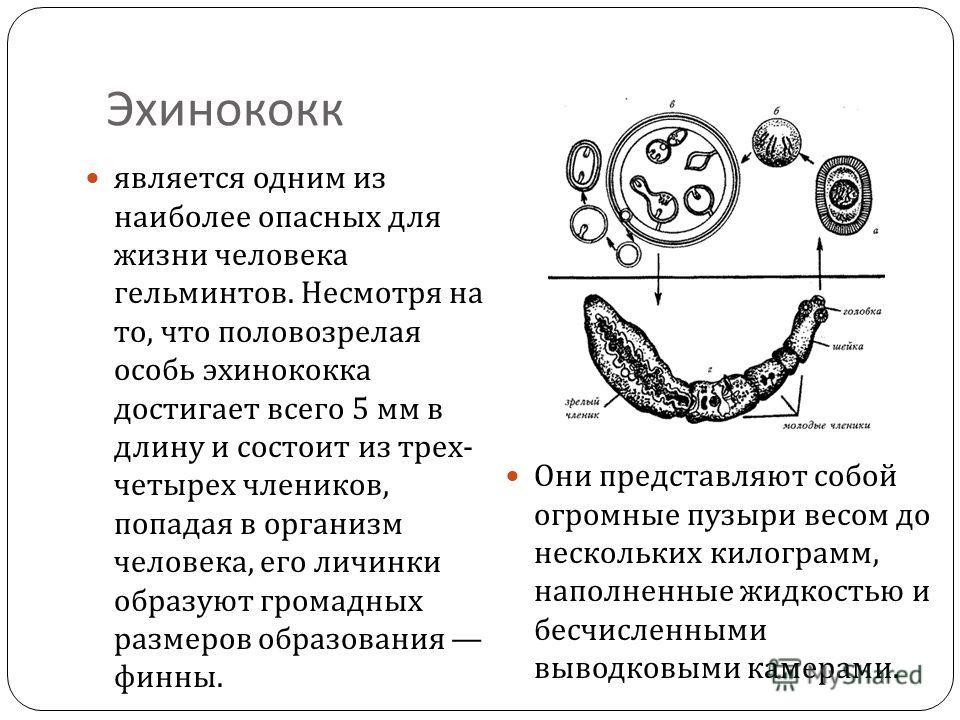Профилактика от глистов у младенцев