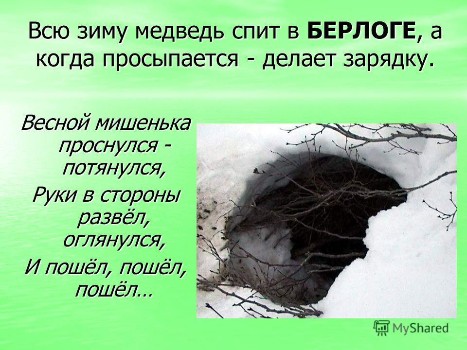 Всю зиму медведь спит в БЕРЛОГЕ, а когда просыпается - делает зарядку. Весной мишенька проснулся - потянулся, Руки в стороны развёл, оглянулся, И пошёл, пошёл, пошёл…