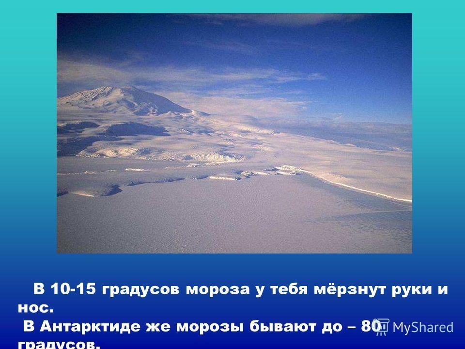 В 10-15 градусов мороза у тебя мёрзнут руки и нос. В Антарктиде же морозы бывают до – 80 градусов. В 10-15 градусов мороза у тебя мёрзнут руки и нос. В антарктиде же морозы бывают до – 80 градусов.