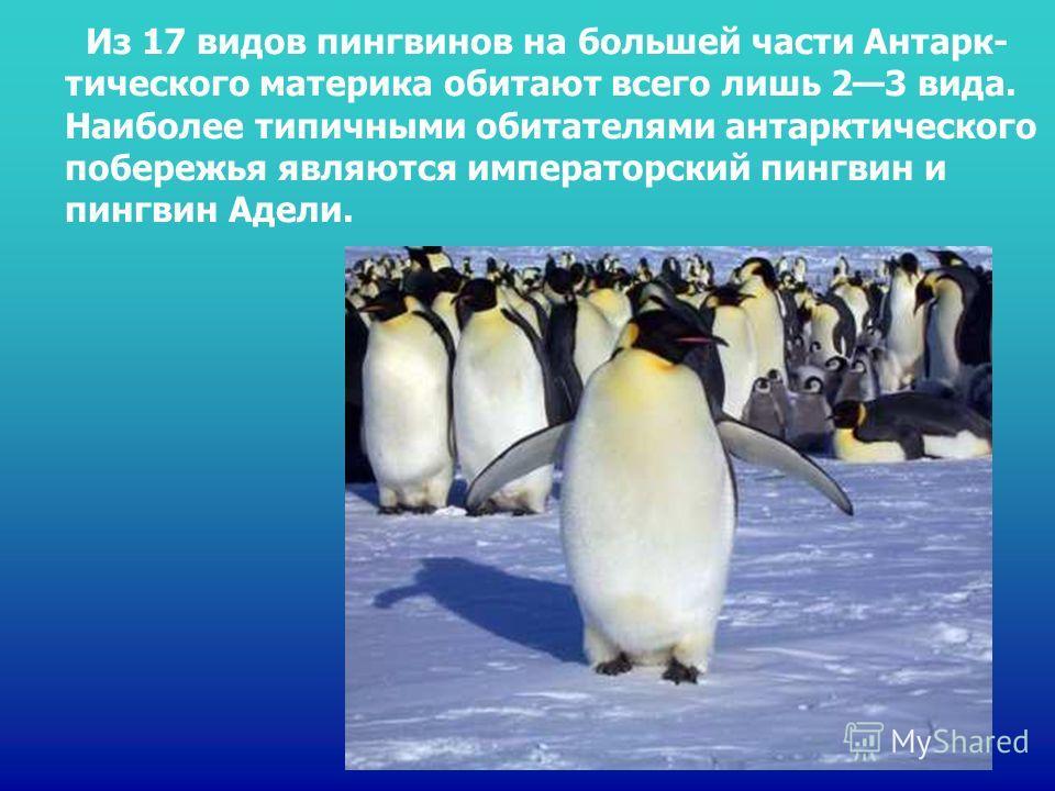 Из 17 видов пингвинов на большей части Антарк- тического материка обитают всего лишь 23 вида. Наиболее типичными обитателями антарктического побережья являются императорский пингвин и пингвин Адели. Из 17 видов пингвинов на большей части антарк- тиче
