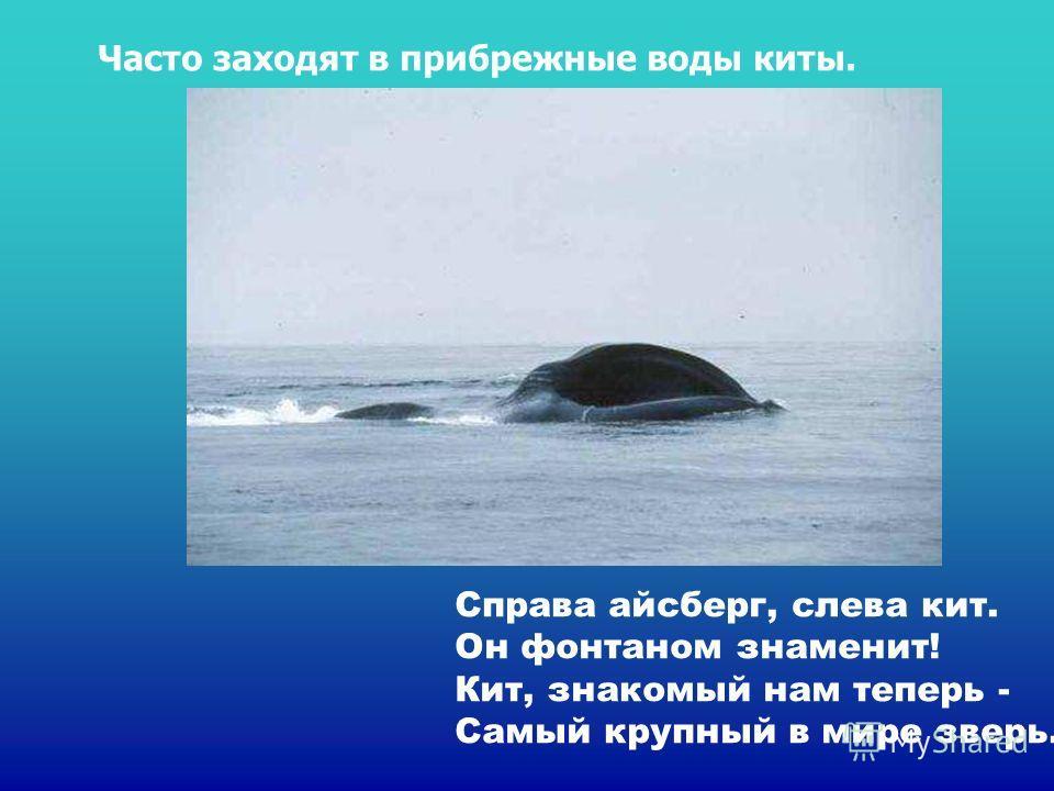 Справа айсберг, слева кит. Он фонтаном знаменит! Кит, знакомый нам теперь - Самый крупный в мире зверь. Часто заходят в прибрежные воды киты. Справа айсберг, слева кит. Он фонтаном знаменит! Кит, знакомый нам теперь - самый крупный в мире зверь. Част