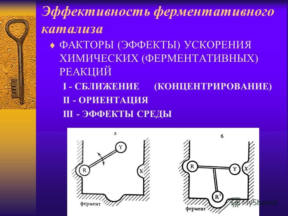 Эффективность ферментативного катализа ФАКТОРЫ (ЭФФЕКТЫ) УСКОРЕНИЯ ХИМИЧЕСКИХ (ФЕРМЕНТАТИВНЫХ) РЕАКЦИЙ I - СБЛИЖЕНИЕ (КОНЦЕНТРИРОВАНИЕ) II - ОРИЕНТАЦИЯ III - ЭФФЕКТЫ СРЕДЫ