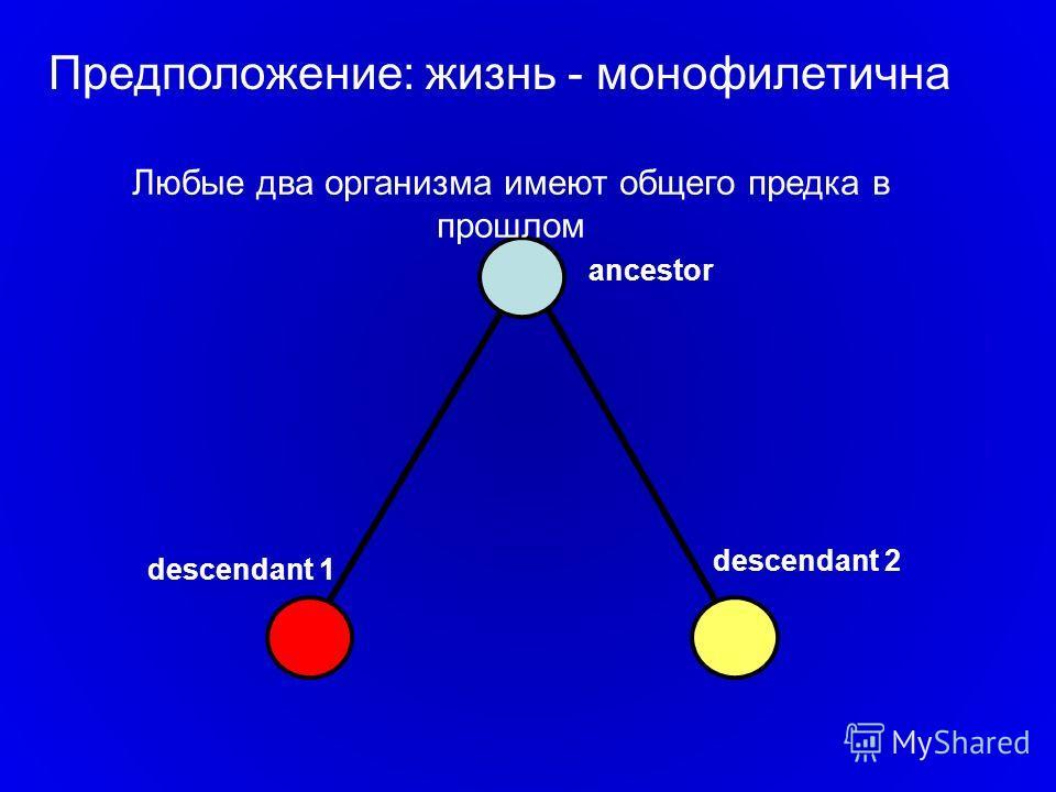 ancestor descendant 1 descendant 2 Предположение: жизнь - монофилетична Любые два организма имеют общего предка в прошлом