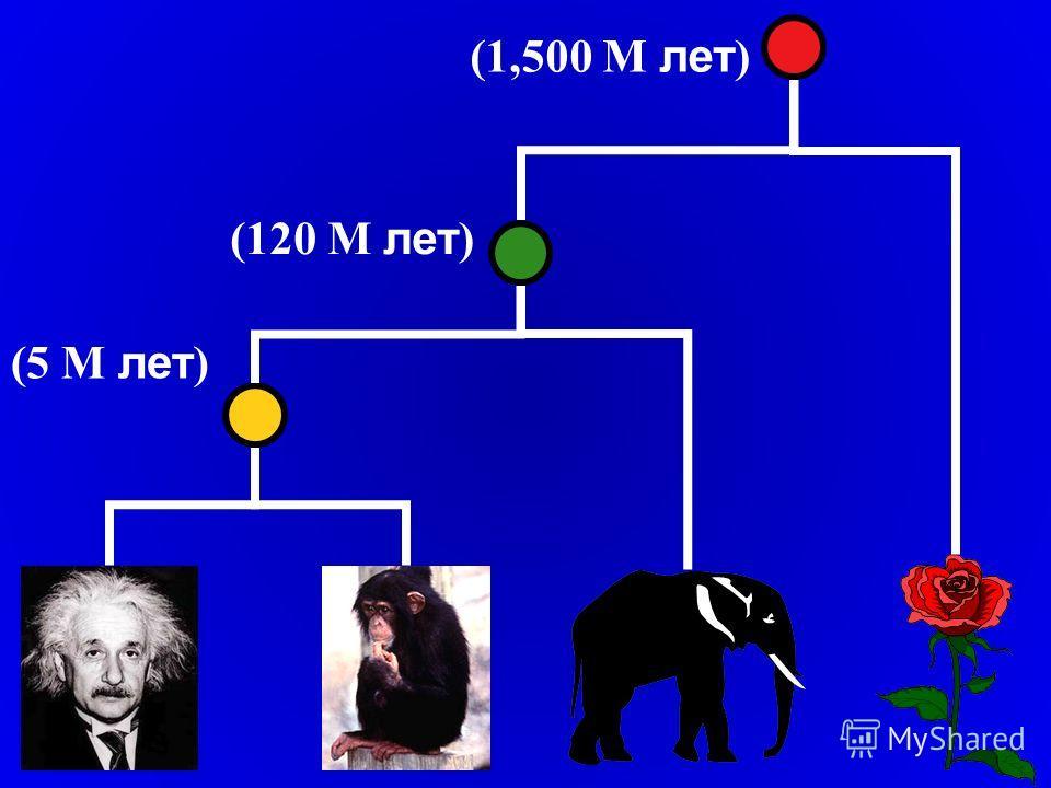 (1,500 M лет ) (120 M лет ) (5 M лет )