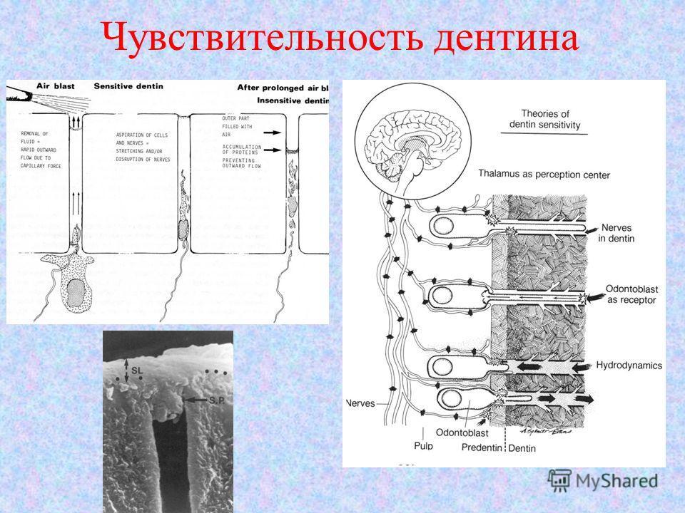 Чувствительность дентина