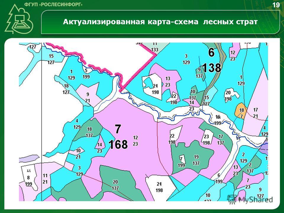 Актуализированная карта-схема лесных страт 19